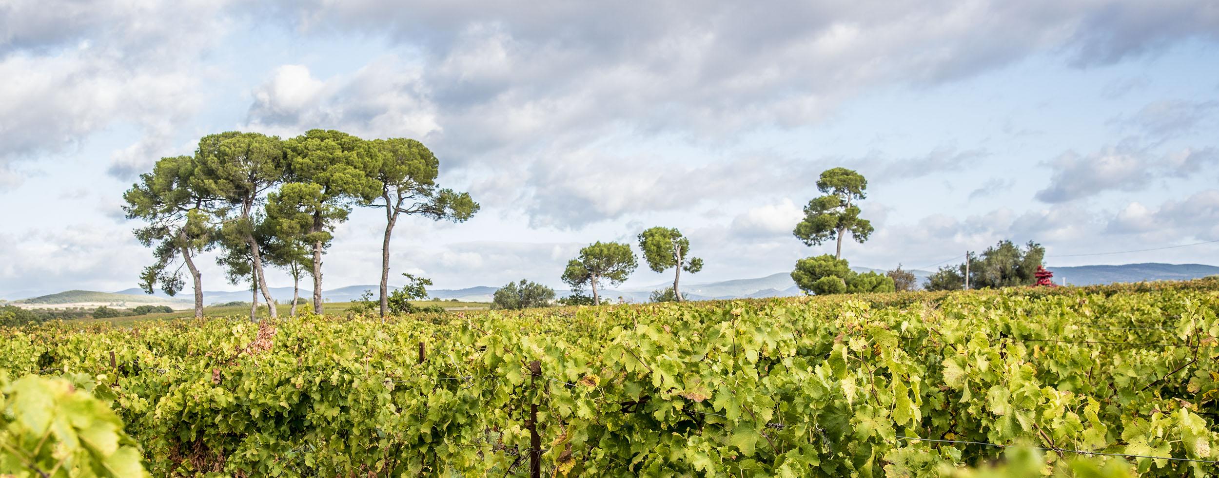 DSC_3459-bandeau-vigne-entree