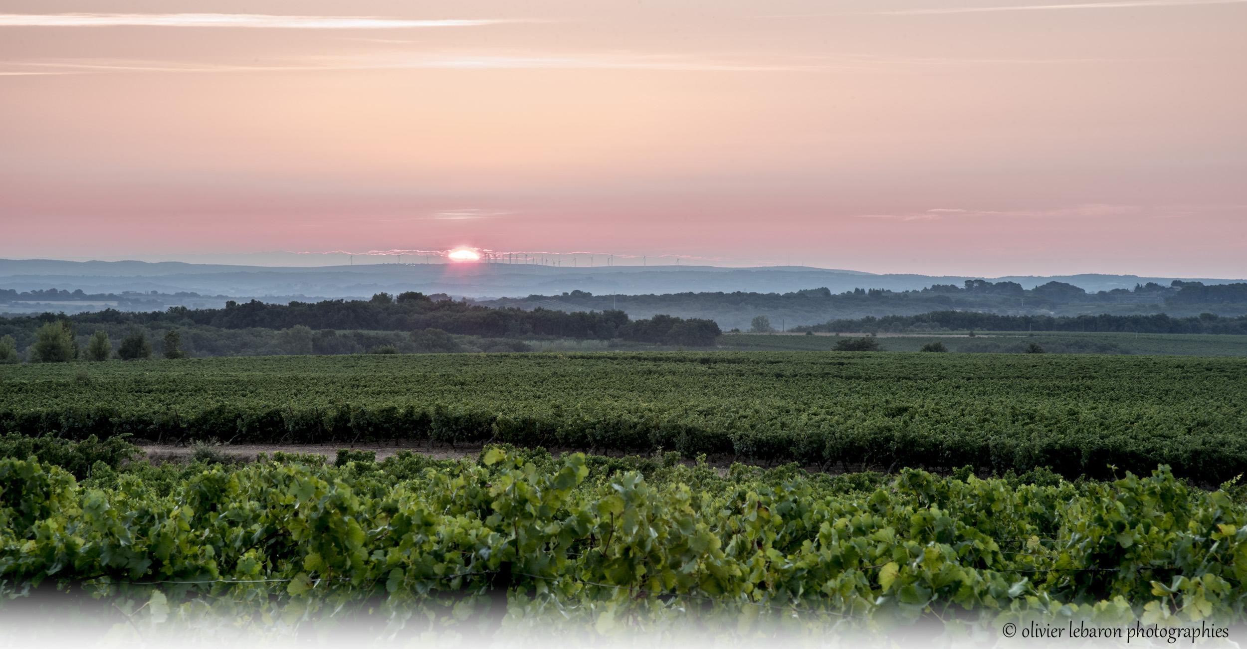 DSC_7043-vignes lever de soleil logo perso