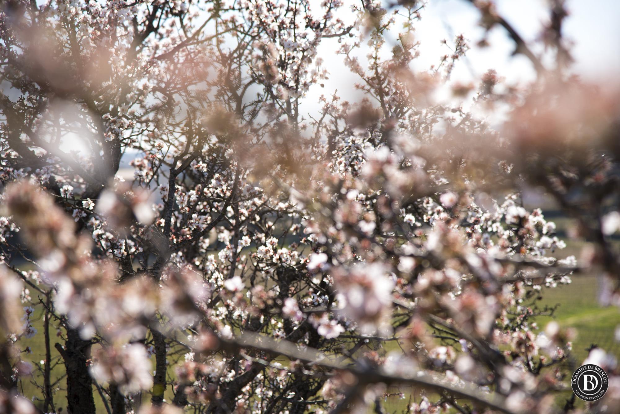 des fleurs en languedoc