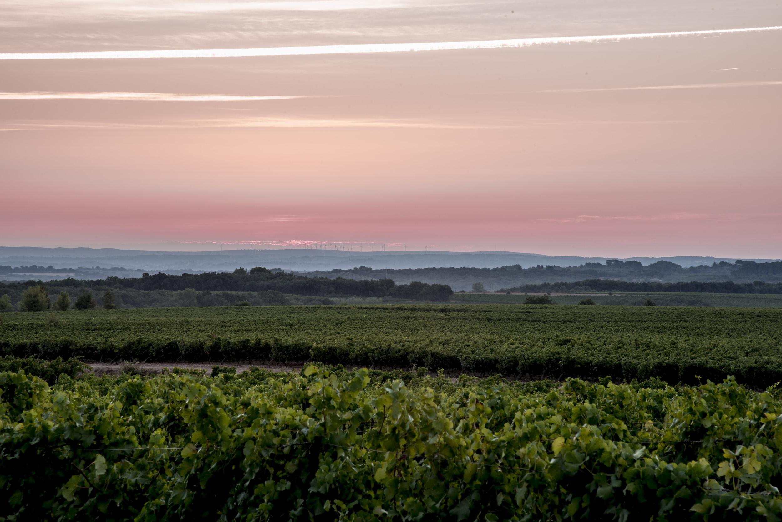 DSC_7042-vignes avant soleil