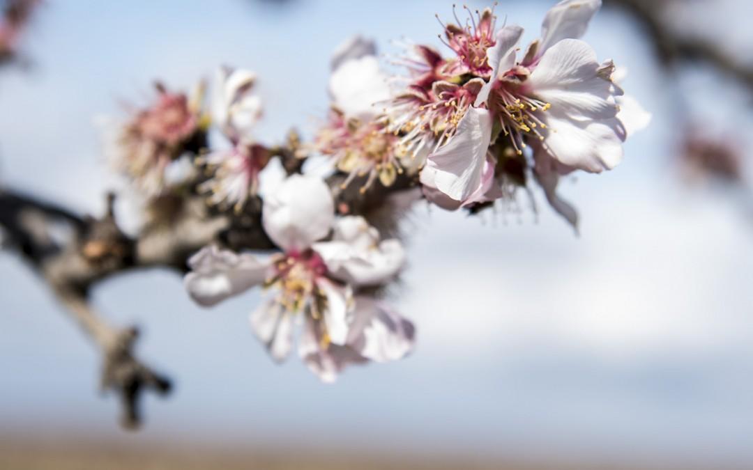 Le printemps ne vas pas tarder à redonner des couleurs au paysage