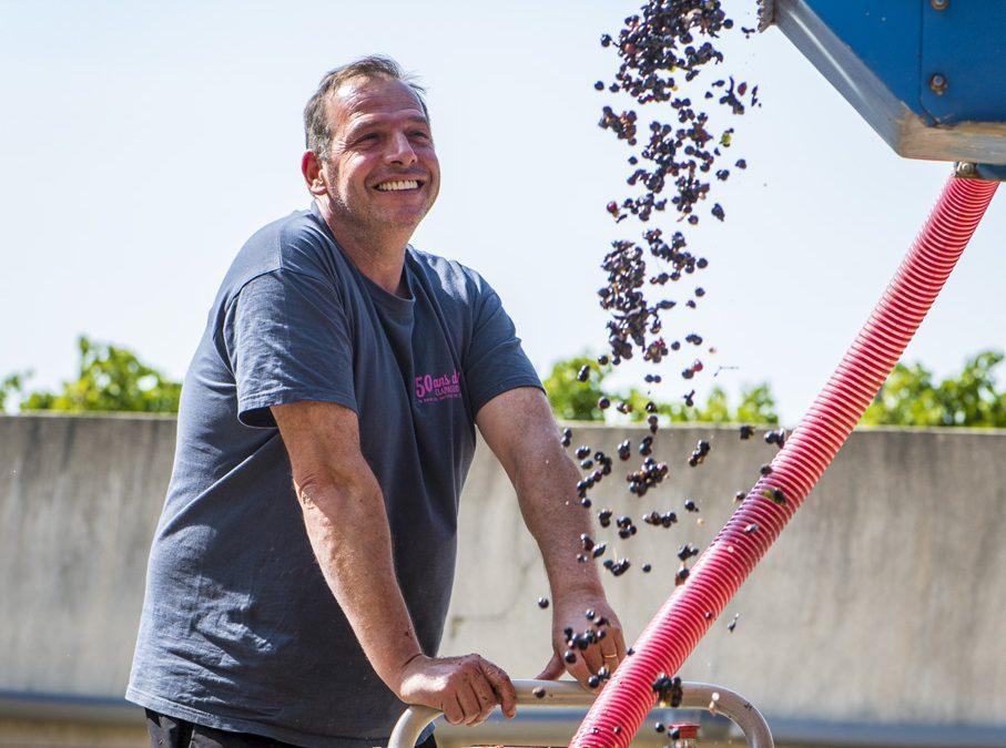 Vendanges 2018 Cabernet Franc Languedoc