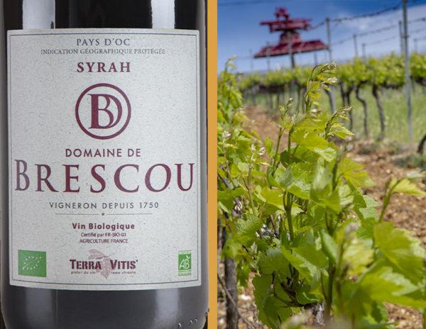 syrah pays doc bio organic wine