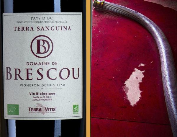 terra sanguina vin bio pays doc rouge
