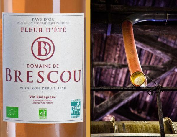 vin rose pays doc